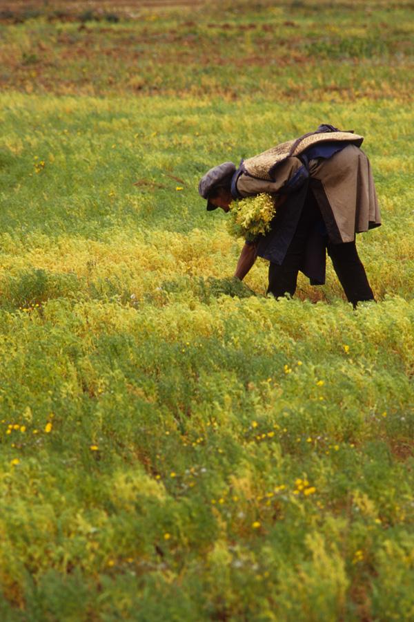 022 Chinese farmer